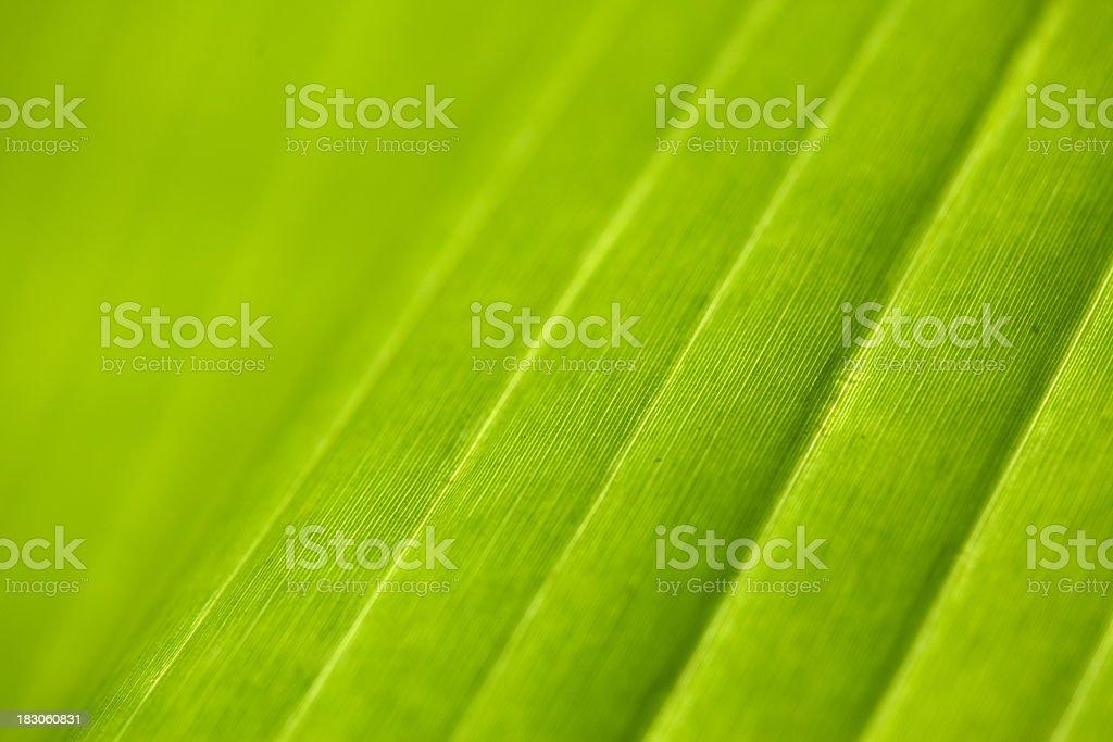 Banana leaf abstract royalty-free stock photo
