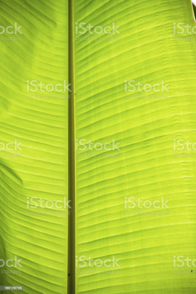 banana leaf background royalty-free stock photo