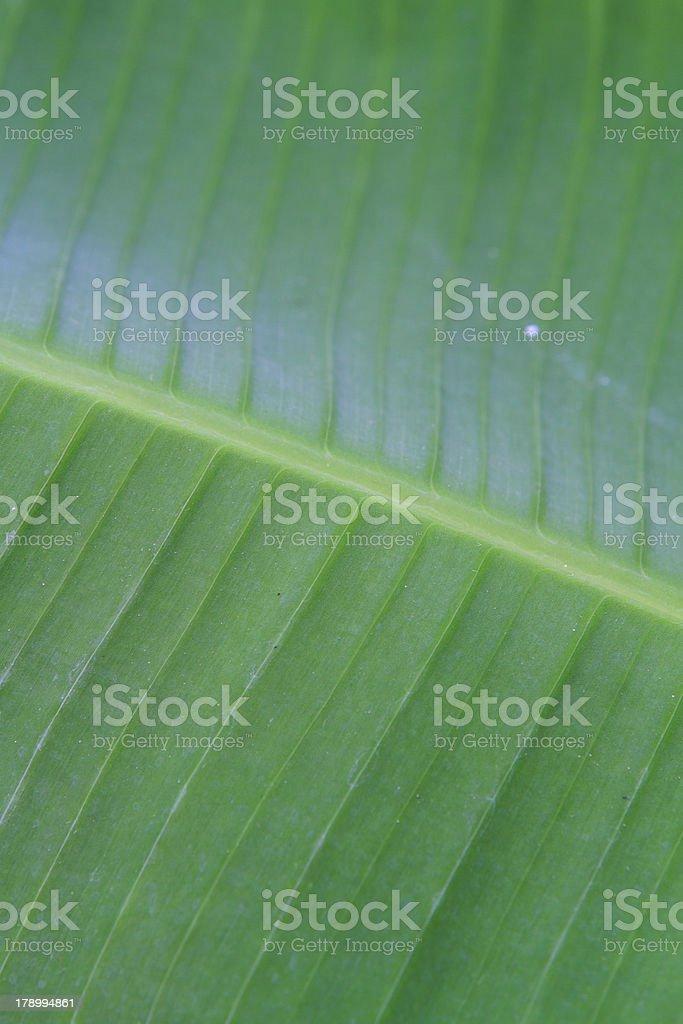 banana leaf close up royalty-free stock photo
