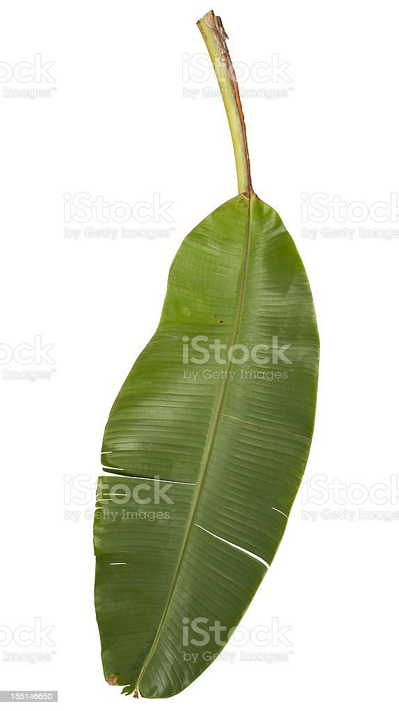 Banana leaf isolated on white with clipping path stock photo