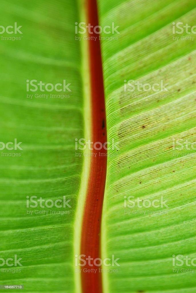 Banana Leaf royalty-free stock photo