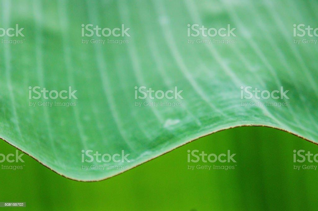 Banana Leave pattern background stock photo