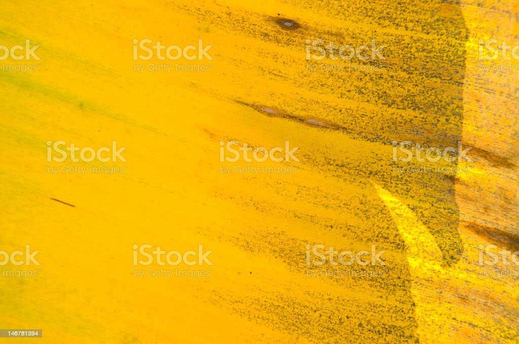 Banana leaves in abstract colorful shape and color royalty-free stock photo
