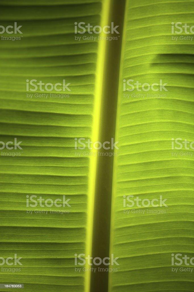 banana palm leaf royalty-free stock photo