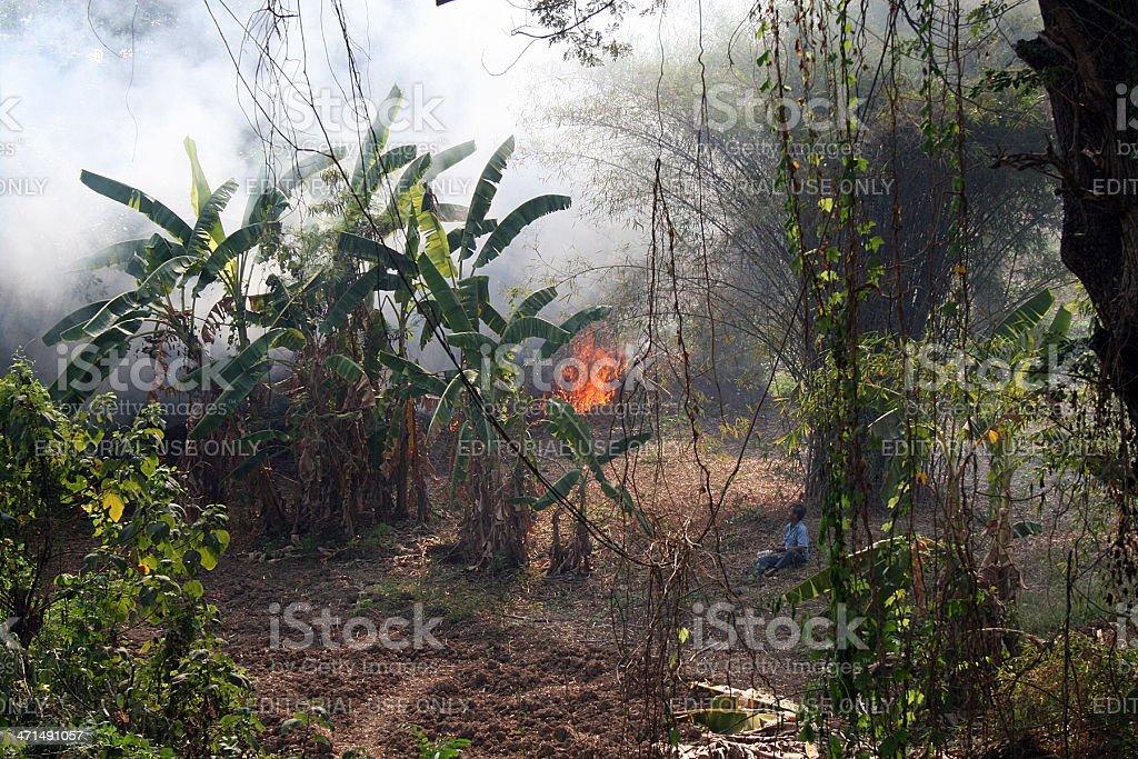 Banana Plantation on Fire royalty-free stock photo