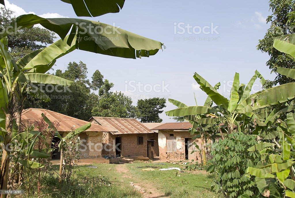 Banana plantation stock photo