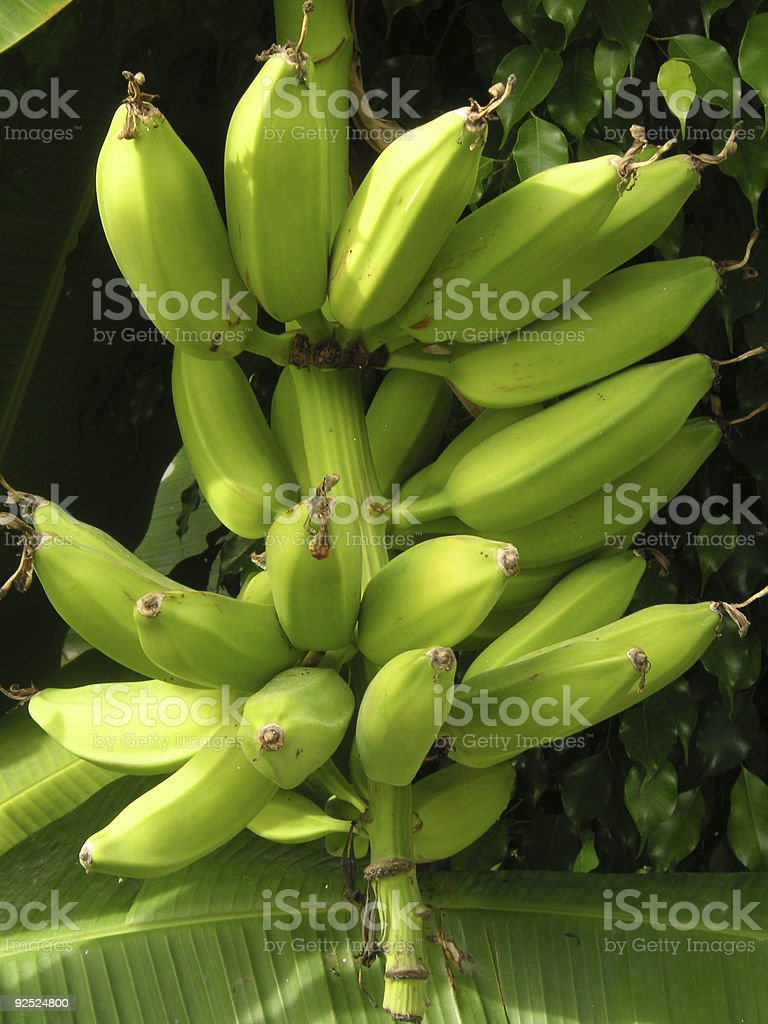 bananas royalty-free stock photo