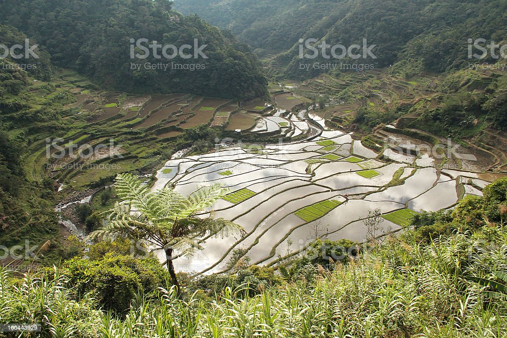 Banaue terrazze di riso, Filippine foto stock royalty-free
