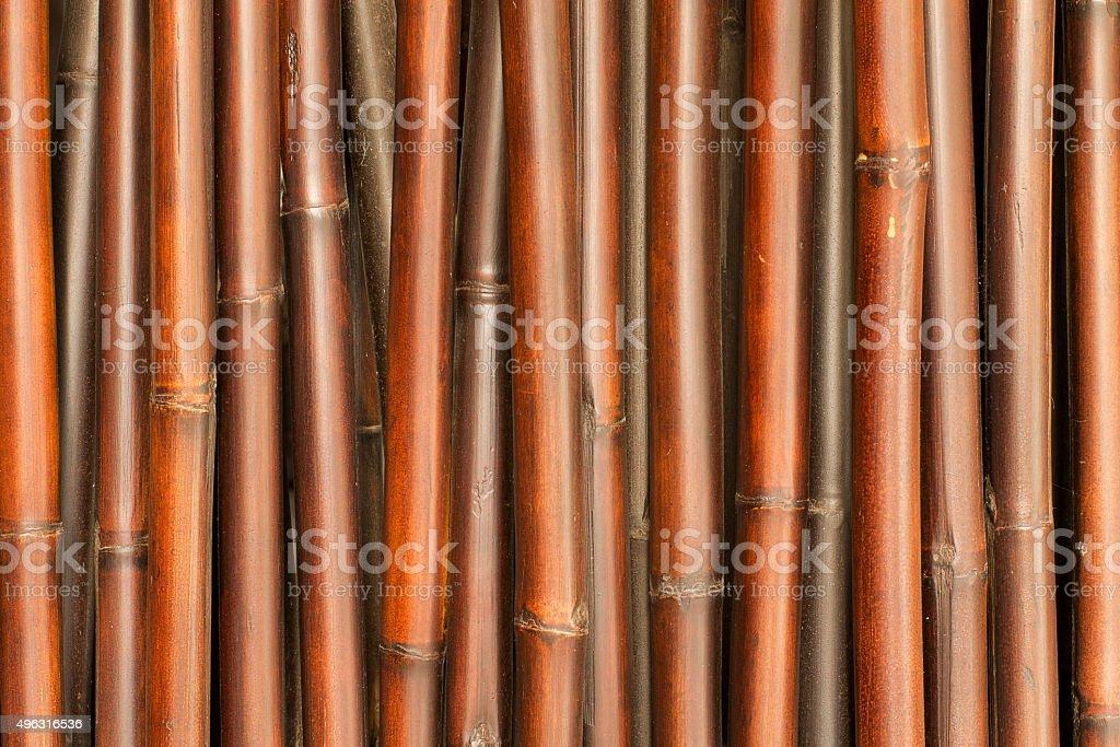 banboo stock photo
