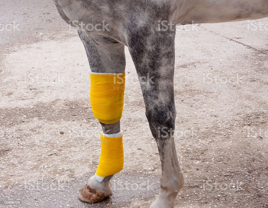 Bandaged leg of injuried horse. stock photo
