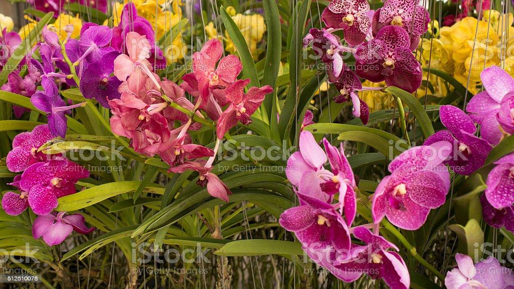 Bangkok Chatuchak flower market stock photo