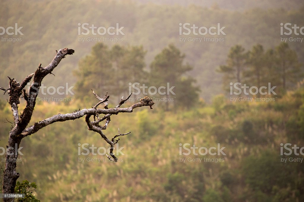 Bank Tree in High Mountian stock photo
