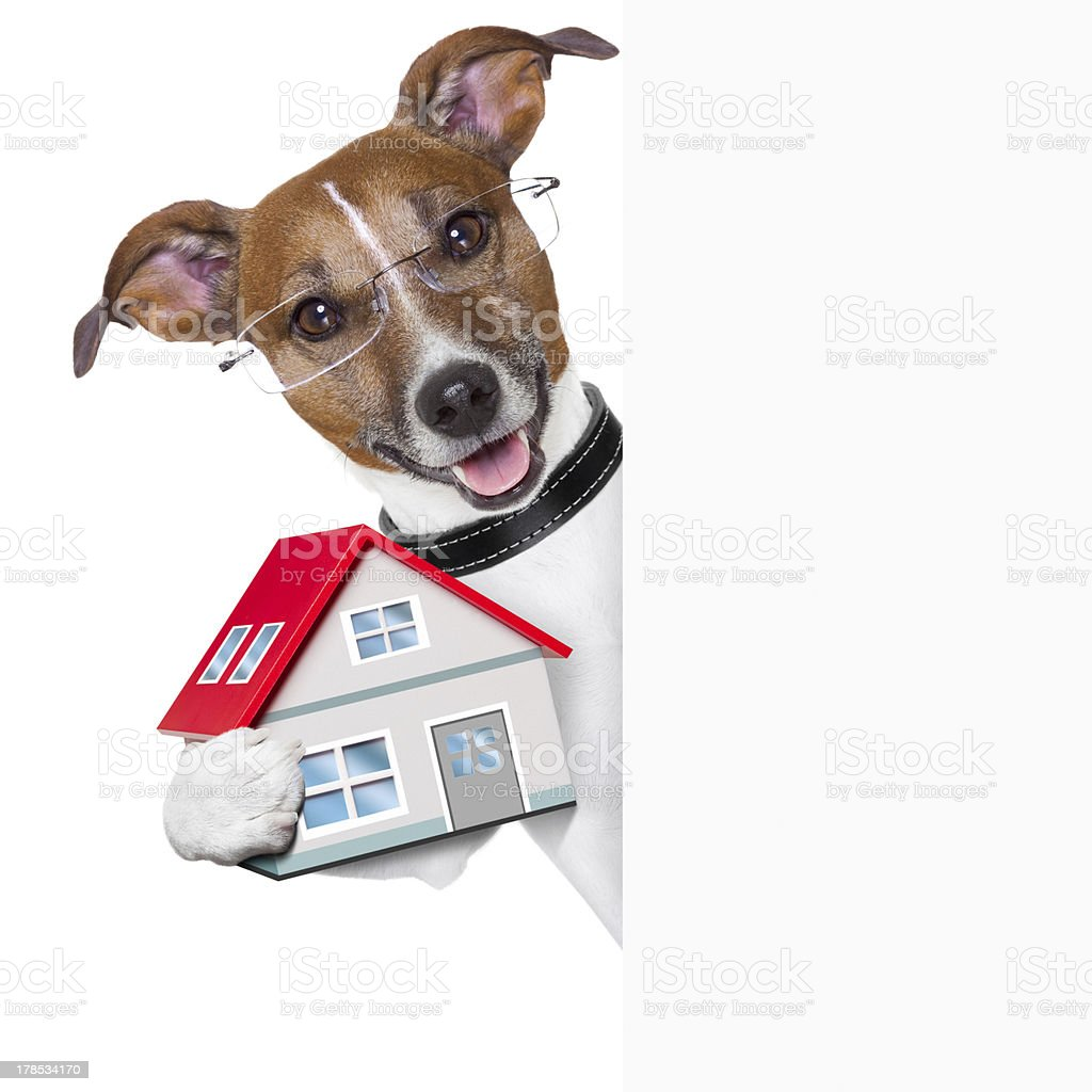 banner dog home and key royalty-free stock photo