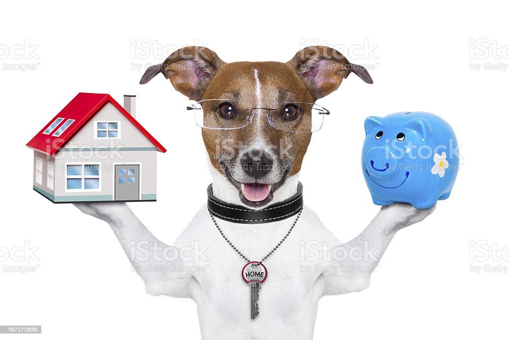 banner dog royalty-free stock photo