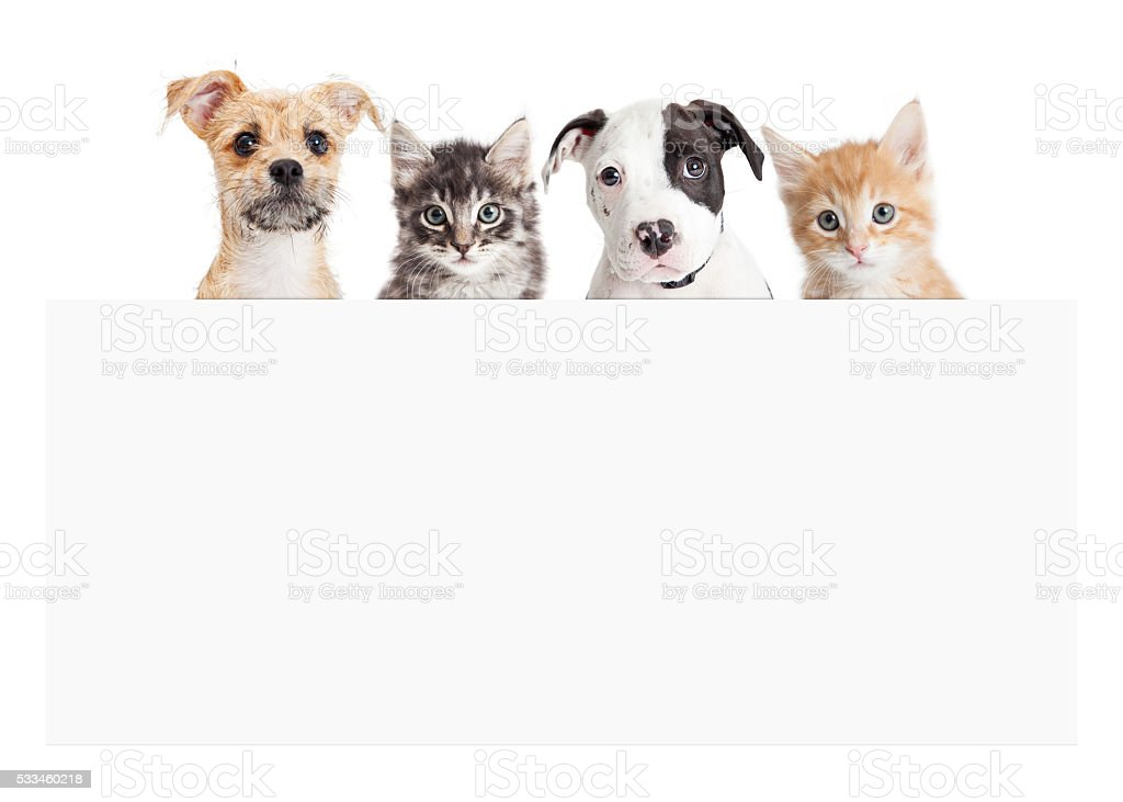 Banner of puppies and kittens over blank sign stock photo