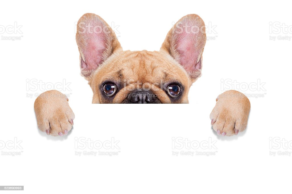 banner placard dog stock photo