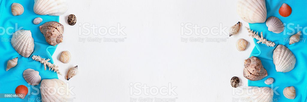 Banner shells and corals on white background. Sea concept. stock photo