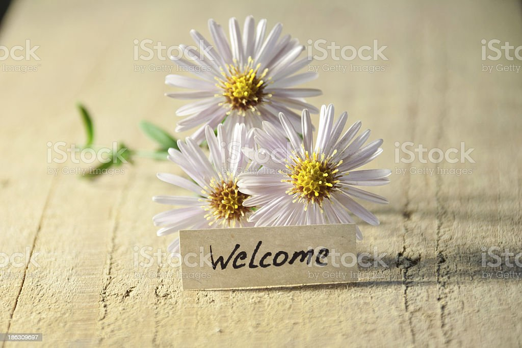 banner with welcome and  blossoms stock photo