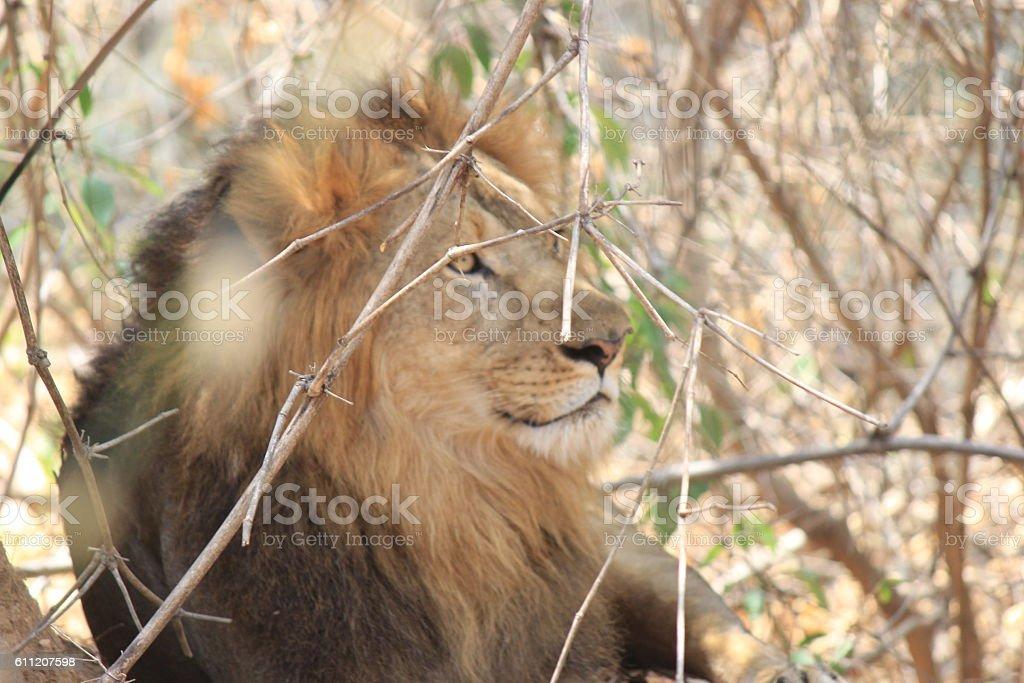 Bannerghatta Biological Park stock photo