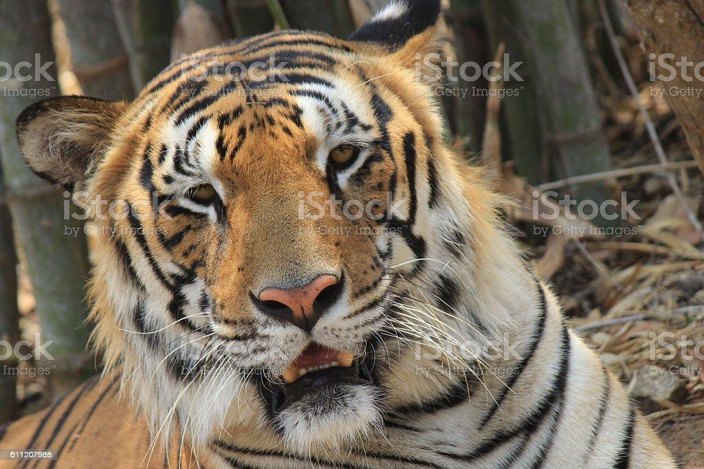 Bannerghatta National Park stock photo
