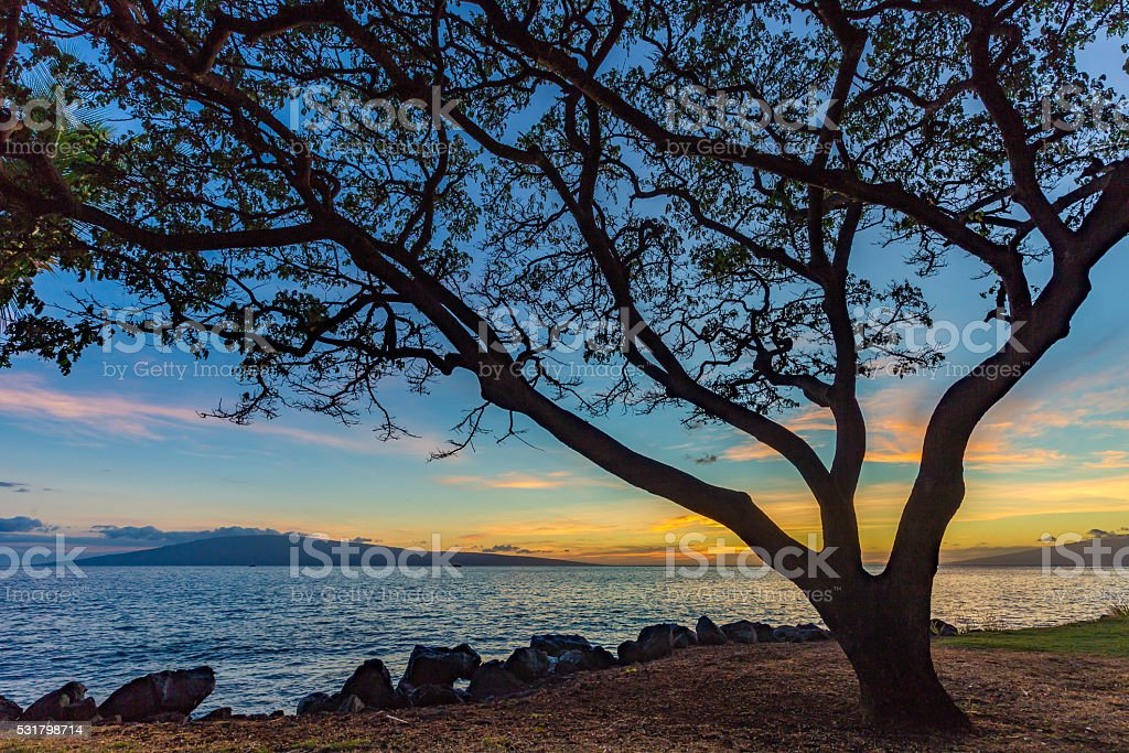 Banyan Tree at Sunset on a Tropical Island stock photo