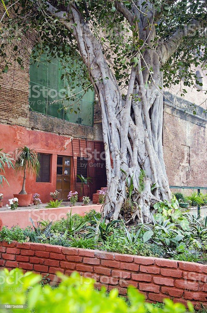 banyan tree in Agra garden, India royalty-free stock photo