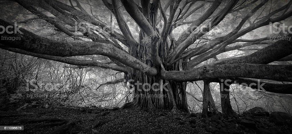 Banyan Tree Infrared stock photo