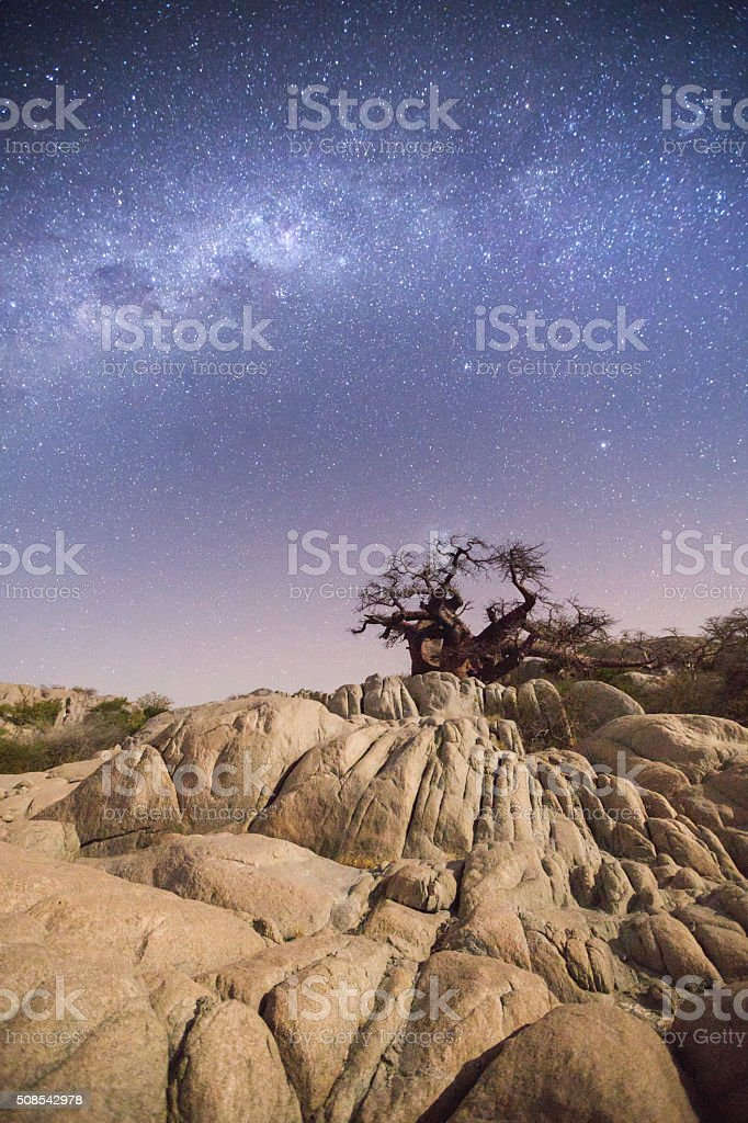 Baobab Tree on Kubu Island stock photo