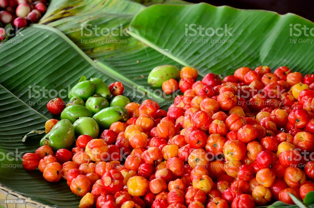 Barbados cherry fruits stock photo