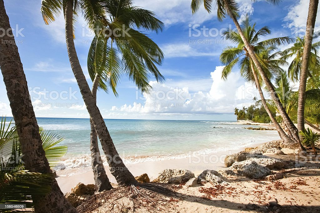 Barbados, West Coast stock photo