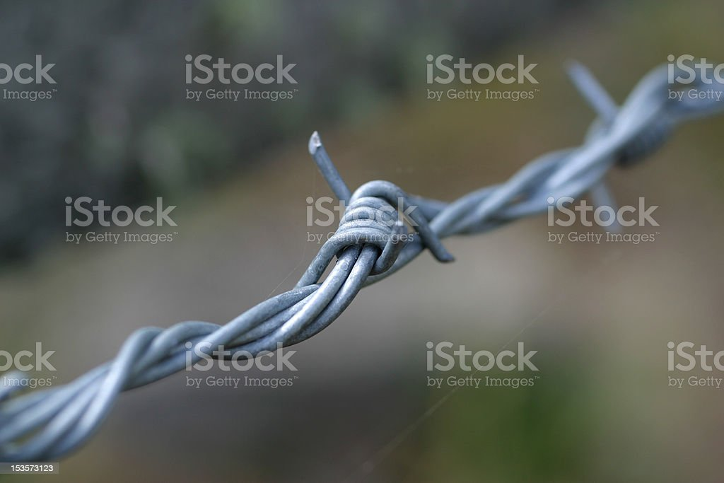 Barbed stock photo