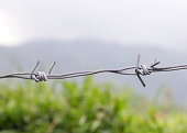 Barbed wire against nature background, close up