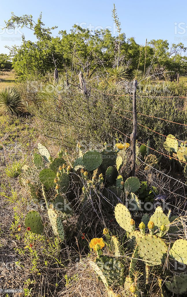 Barbed Wire Fence and Desert Plants stock photo