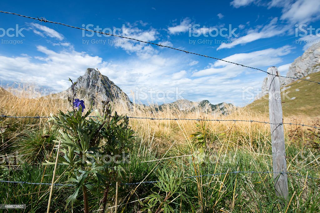 barbed wire fence on dry mountain meadow at fall stock photo