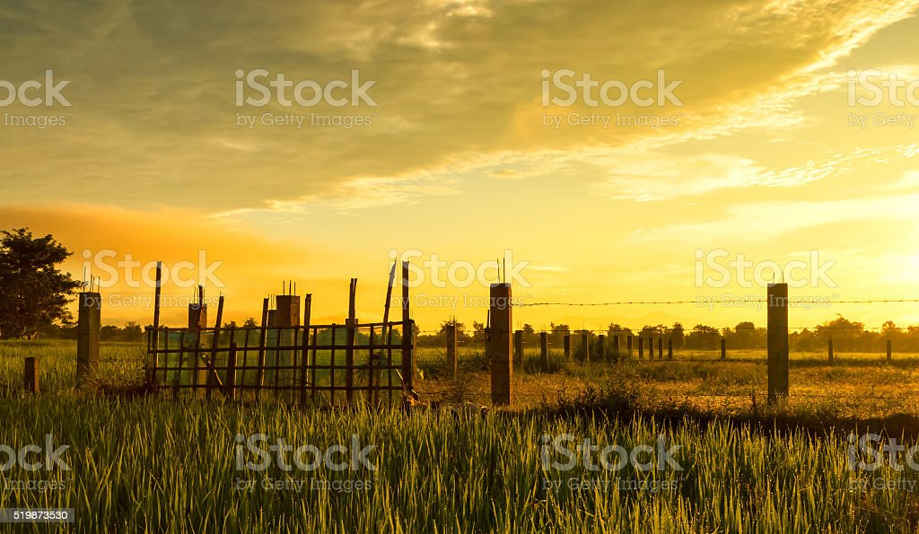 Barbed wire fence with rice paddy stock photo