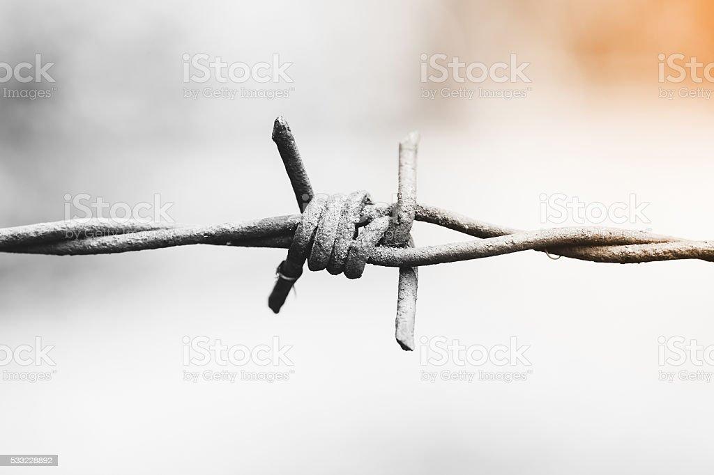 barbed wire. Monochrome stock photo