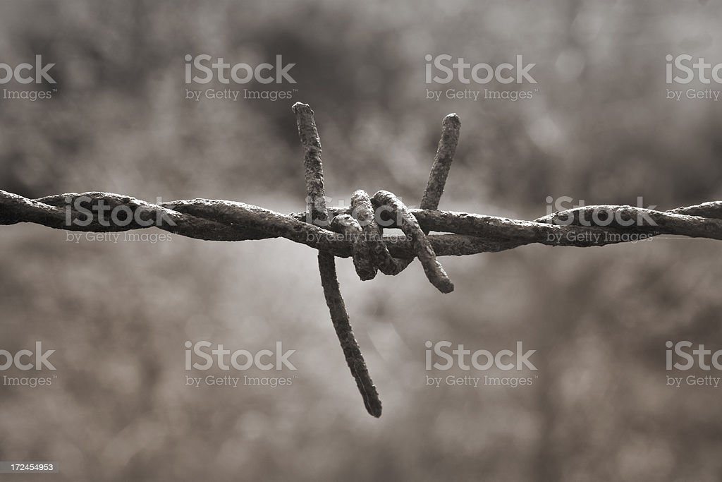barbed wire old royalty-free stock photo
