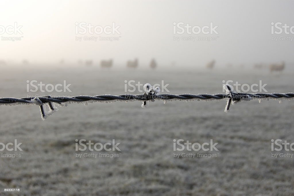 Barbed Wire. royalty-free stock photo