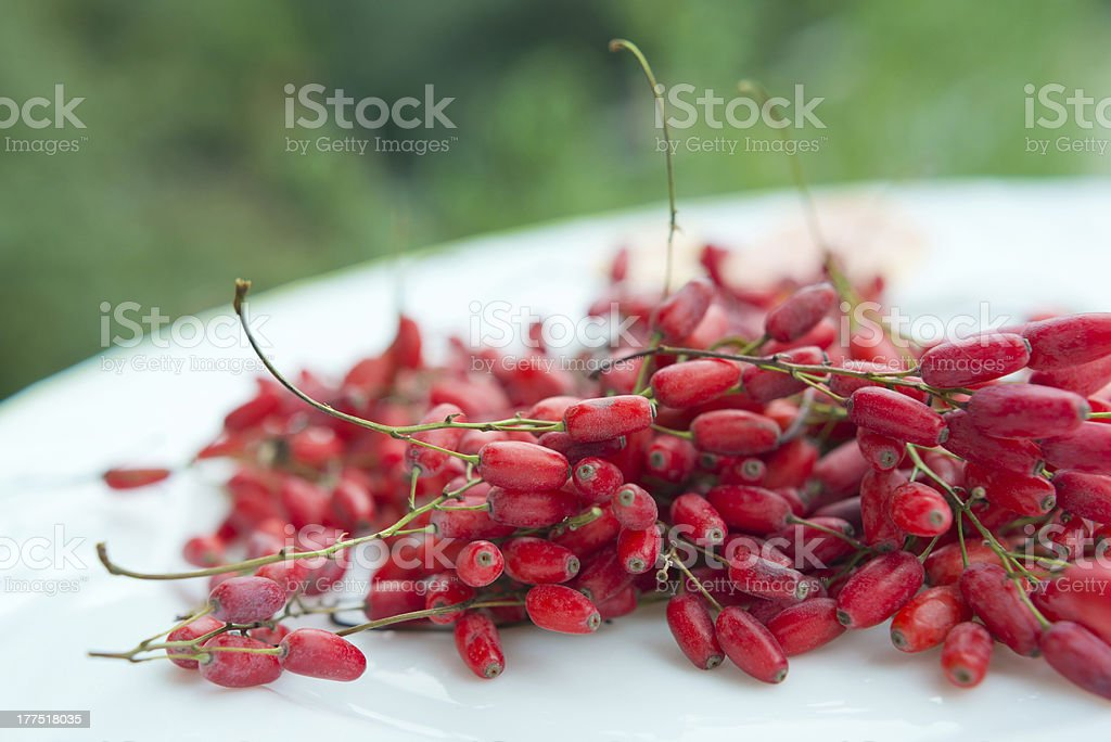 barberry royalty-free stock photo