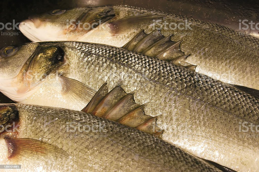 barbs on a sea bass royalty-free stock photo