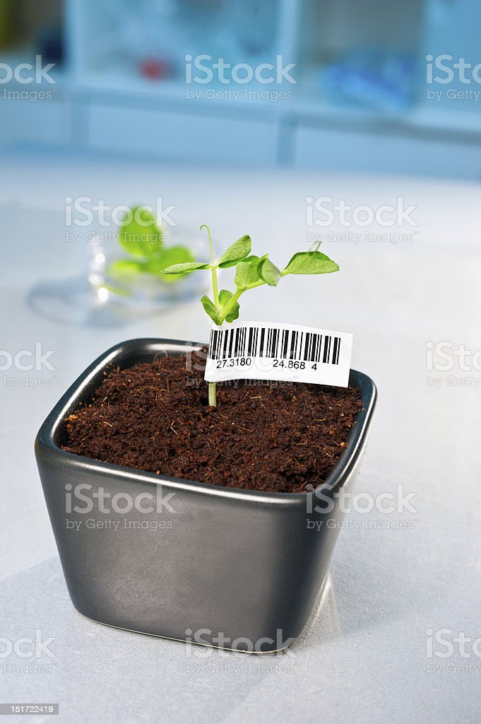 Barcode on transgenic plant royalty-free stock photo