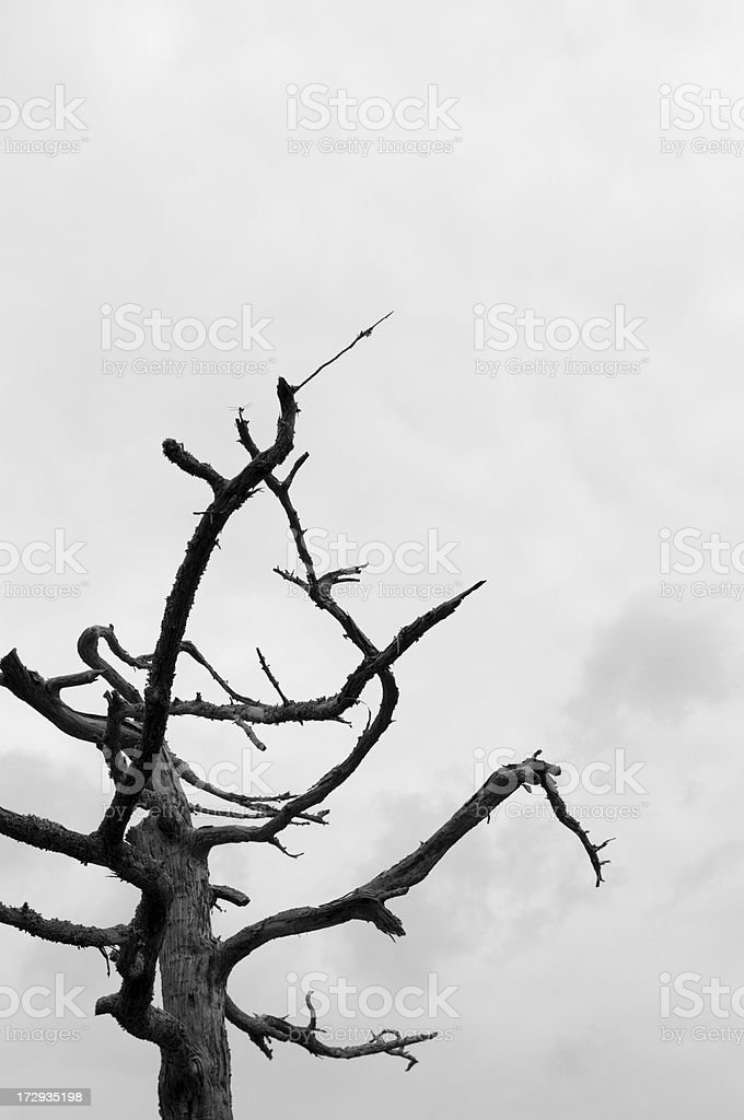 Bare and Dead royalty-free stock photo