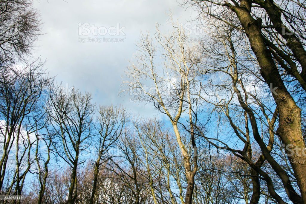 Bare branches against a winters sky in woodland in the UK stock photo