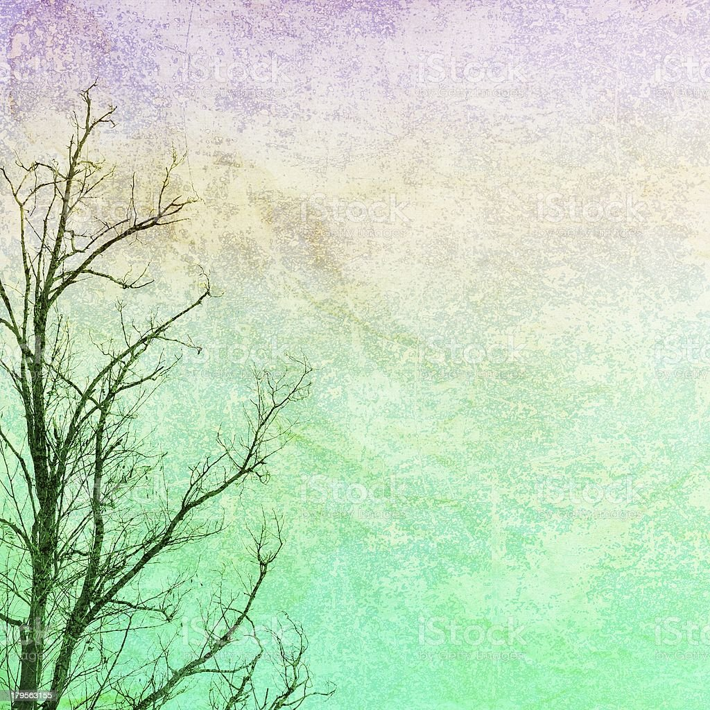 Bare branches on grunge background royalty-free stock photo