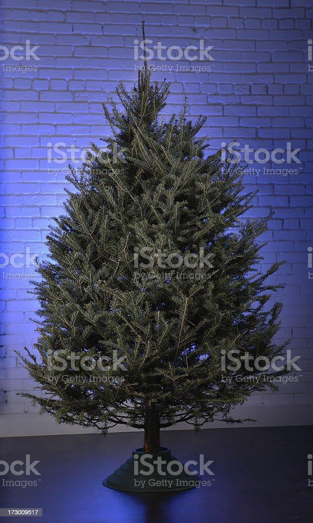 Bare Christmas tree royalty-free stock photo