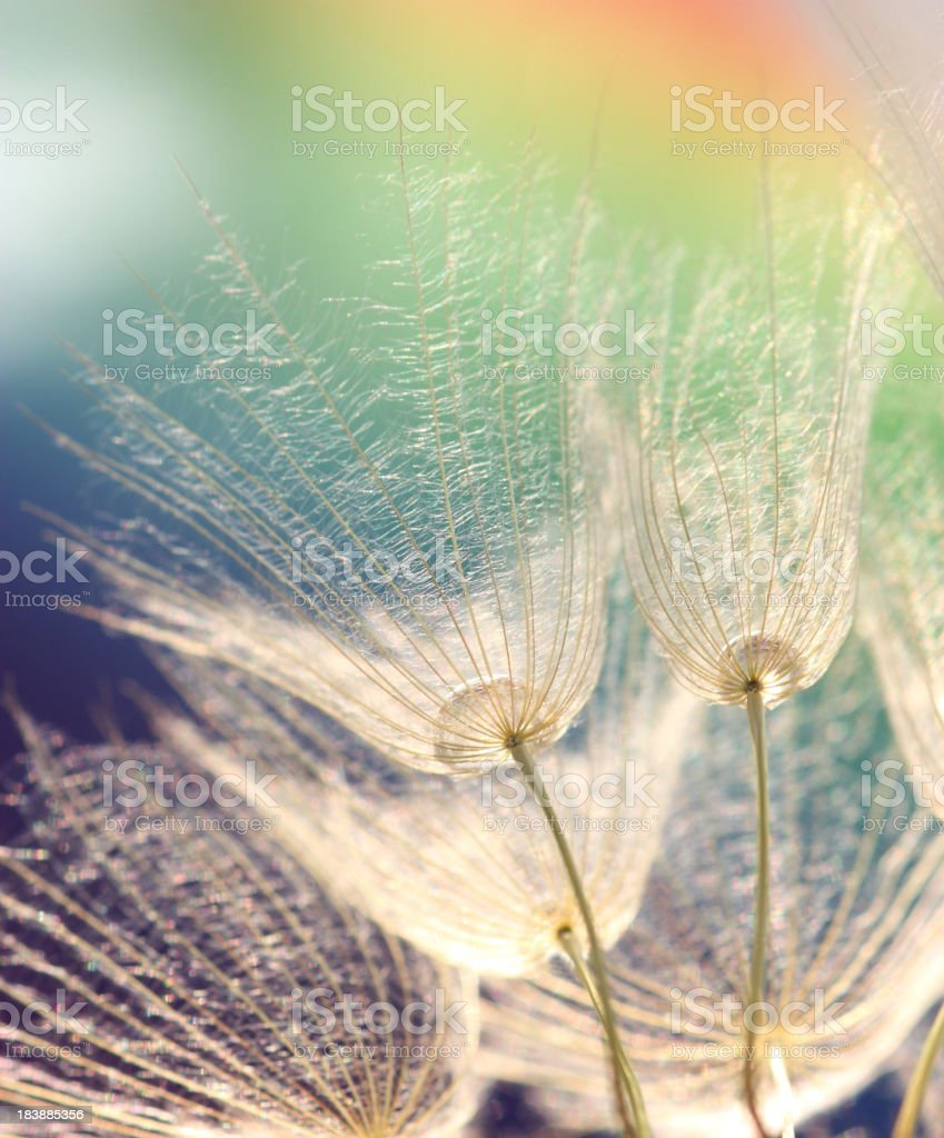 Bare dandelions photographed from below against colored sky royalty-free stock photo