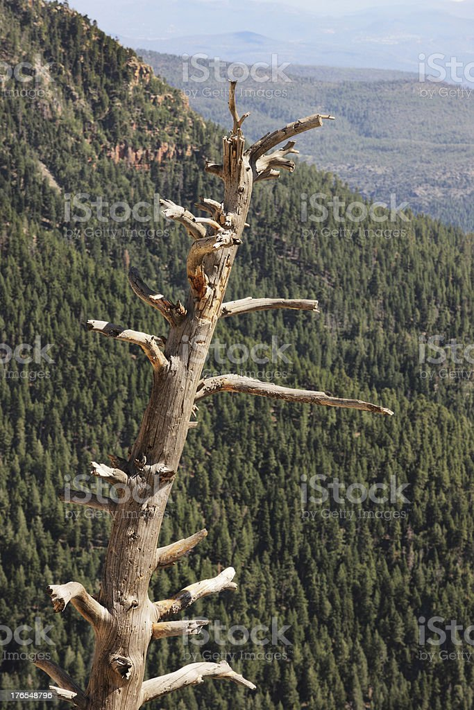 Bare Dead Tree Mogollon Rim stock photo