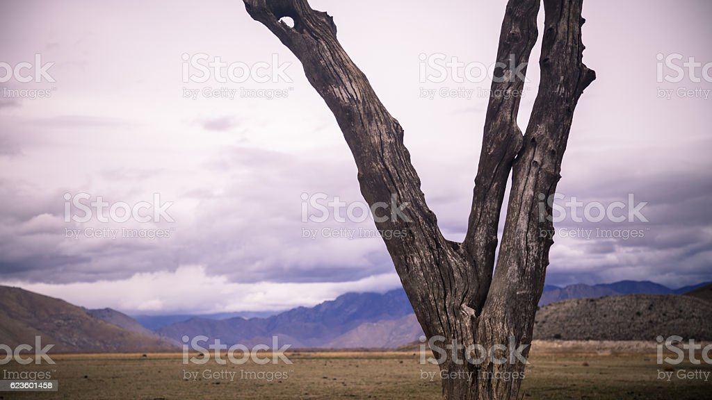 Bare Dead Tree on Dry Lake Bed with Threatening Sky stock photo