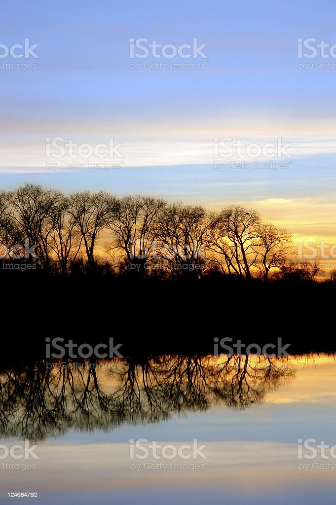 Bare Oak Trees and Sunset stock photo