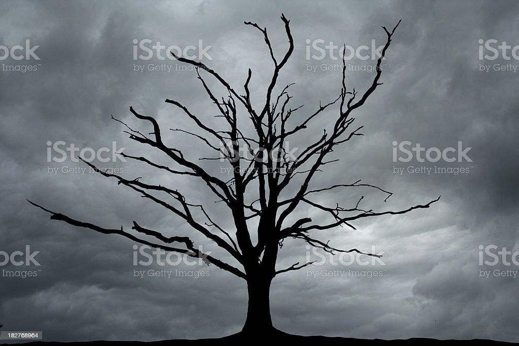 Bare Scary Tree royalty-free stock photo